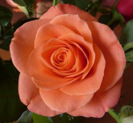 roseorange1.jpg