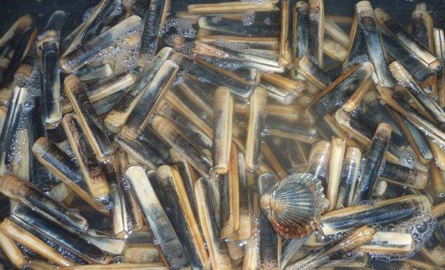 Logonna pêche 11092014 (8)redim