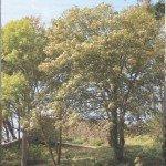 Plougastel- Le relecq 20 ans pont de l'Iroise 20 septembre 2014 (53)