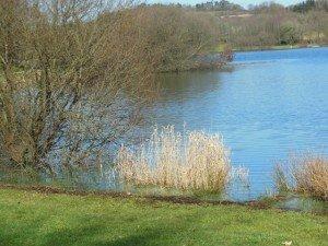 Sizun - Lac du drennec mars 2015 (2)