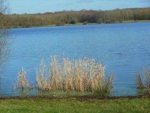 Sizun - Lac du drennec mars 2015 (3)