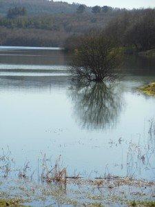 Sizun - Lac du drennec mars 2015 (5)