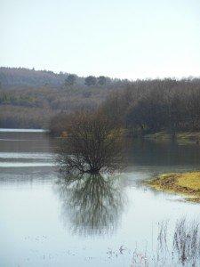 Sizun - Lac du drennec mars 2015 (6)