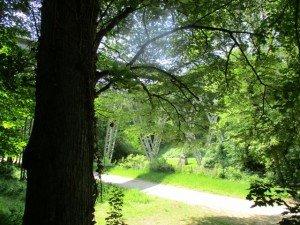 Brest Pont et bois brasserie 052016 (8)